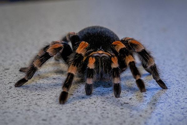 Spider Animal Care